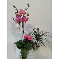 Jardinera orquídea i...