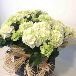 Hortensia con cesta de mimbre