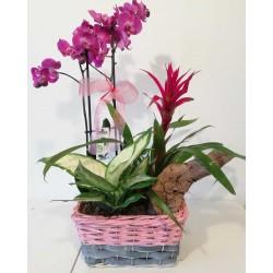 Conjunt d'orquídia i vriesea