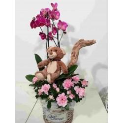 Conjunt d'orquídia i azalea