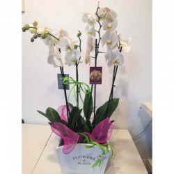 Orquídea con caja blanca