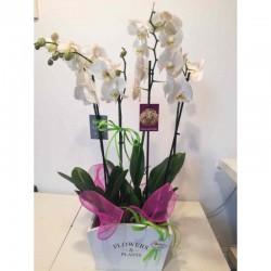 Orquidea con caja blanca
