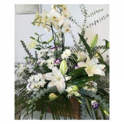 Centre d'orquídia i flor