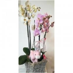 Cistell amb dues orquídies...