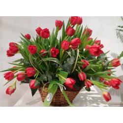 Cistell tulipes