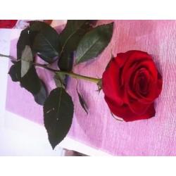 Pack rosa Sant Jordi embossada